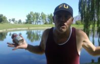 Fukushima news; June 18 2017 NUCLEAR ENERGY KILLS the Great Pacific Salmon COMEBACK;;